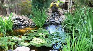 water gardening ideas from parade of ponds