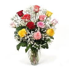 multicolored roses dozen multicolored roses 20 plantshed