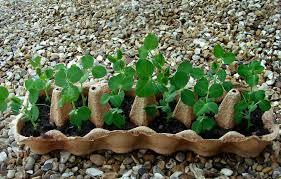 starting a vegetable garden from scratch uk garden post plant a