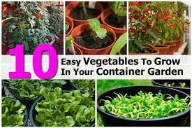 10 easy vegetables to grow in your container garden