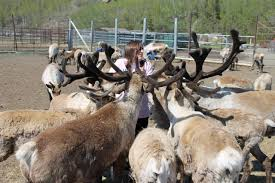 spirit halloween anchorage reindeer farm