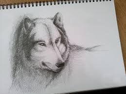 wolf pencil sketch by pixelscorched on deviantart