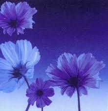 imagenes con flores azules dia de la maestra desde la orilla flores azules