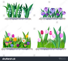 Image Of Spring Flowers by Spring Flowers Lily Valley Crocus Tulips Stock Vector 555421450