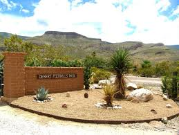unique desert landscaping ideas