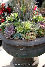 heidi claire succulents and urns