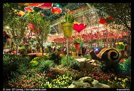 Botanical Gardens Hotel Picture Photo Botanical Garden Bellagio Hotel Las Vegas Nevada