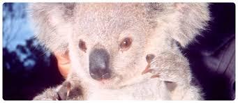 australian wildlife interesting information
