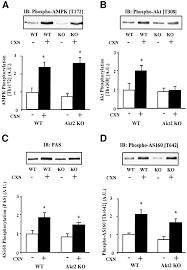 distinct signals regulate as160 phosphorylation in response to