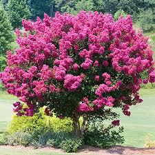 mornington tree delivery