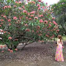 Oahu Botanical Garden by 22 Best All Things Oahu Hawaii Images On Pinterest Oahu Hawaii