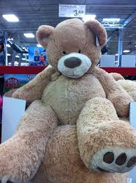 big teddy best 25 big teddy ideas on big teddy