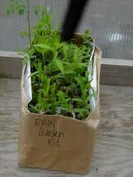 prairie moon nursery native plant nursery ann arbor mi wet meadow ecosystem starter