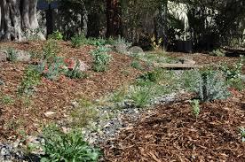 sacramento native plants design build u2014 restoration landscaping
