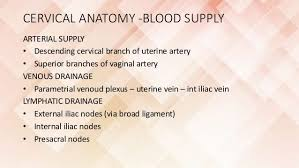 Anatomy Of Female Reproductive System Imaging Of Female Reproductive System Rv