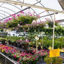 Flowers Bristol Tn - home u0026 garden showplace garden center kingsport tn