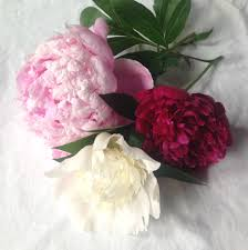 Peony Floral Arrangement by Beginners Guide To Peonies Growing Tips And Beautiful Diys