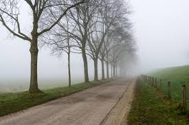 row of leafless trees beside a country road stock photo