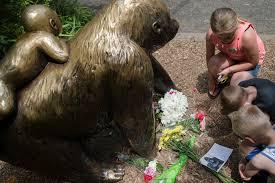 mommy loves you u0027 boy rescued after gorilla is shot at cincinnati