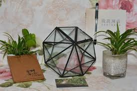 minimalism diamond shape hanging glass terrarium local tyrants
