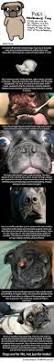 best 25 selective breeding ideas on pinterest all breeds of