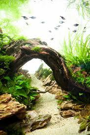 Aquascape Tank 90x45x45cm Planted Dragon Stone Aquascape Bridge Plants And