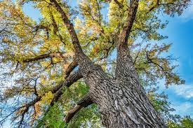 comprehensive tree care by integrated lawn tree care