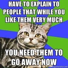 Anxiety Cat Meme - i have done this while someone was trying to talk humiliation