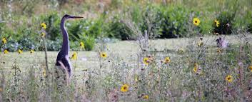 native plants and animals natural areas denver parks and recreation