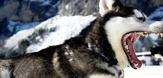 how to treat a dog bite policygenius
