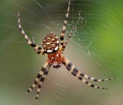 world wild web a cluster of new species of spiders in india the