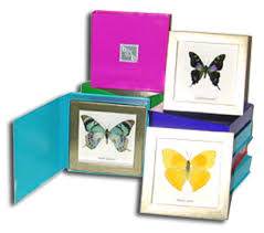 butterfly gifts butterflies for girl in butterfly gift box