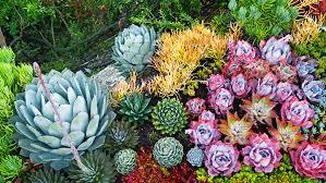 Gardening Trends 2017 Top 10 Garden Trends Sunset