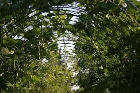 magic under the arched bean trellis