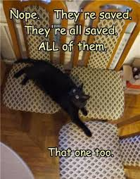 Meme Chair - funny pictures and funny meme s online funny cat saving chairs meme