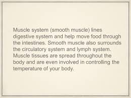 muscular system by maddy and toby ppt video online download