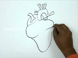 how to draw a human heart youtube