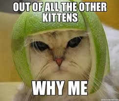 Why Me Meme - why me out of all the other kittens why me weknowmemes