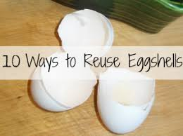 ground egg shells 10 ways to reuse eggshells around your house a non toxic list