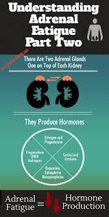 best 20 adrenal gland hormones ideas on pinterest u2014no signup