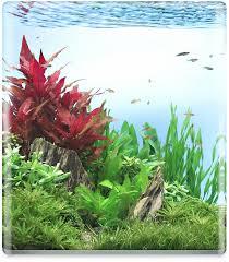 Aquascape Freshwater Aquarium Dennerle Plant Aquascaping Workshop Fish Gallery