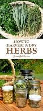 970 best diy herb garden images on pinterest garden ideas diy