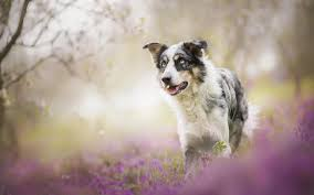 cool dogs wallpaper hd download of cute dog picture