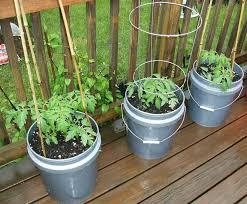 container vegetable gardening beginners gardensdecor com