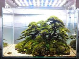 underwater jungle planted aquariums pinterest aquascaping