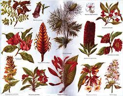the encyclopedia americana 1920 plants ornamental wikisource