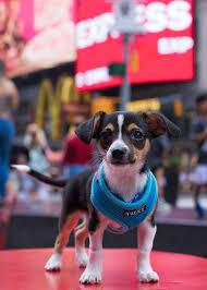 pet adoption story tucky from kentucky petgotchaday