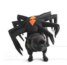 Halloween Costumes Bulldogs Diy Dog Costumes Halloween Pedigree Foundation