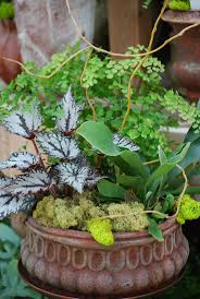 Indoor Garden Containers - 500 best images about gardening and landscaping on pinterest