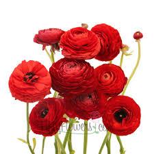 fresh flowers in bulk wholesale flowers wedding flowers bulk flowers fiftyflowers